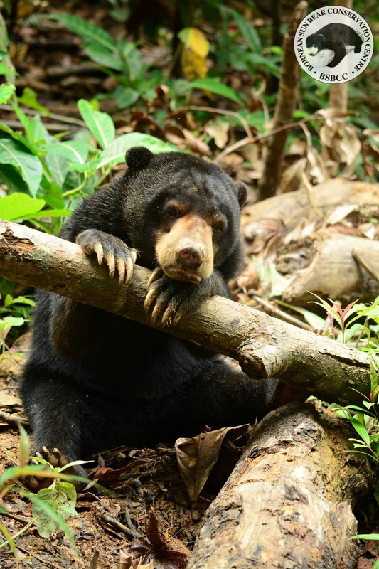 Please save the sun bears.